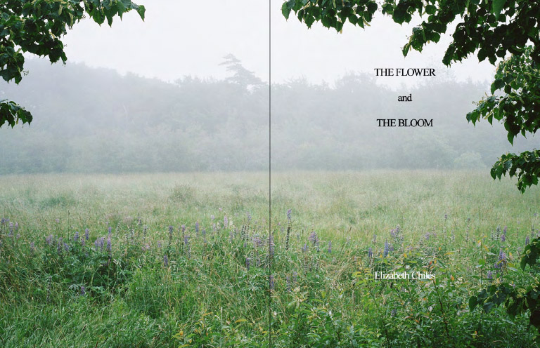 The flower and the bloom