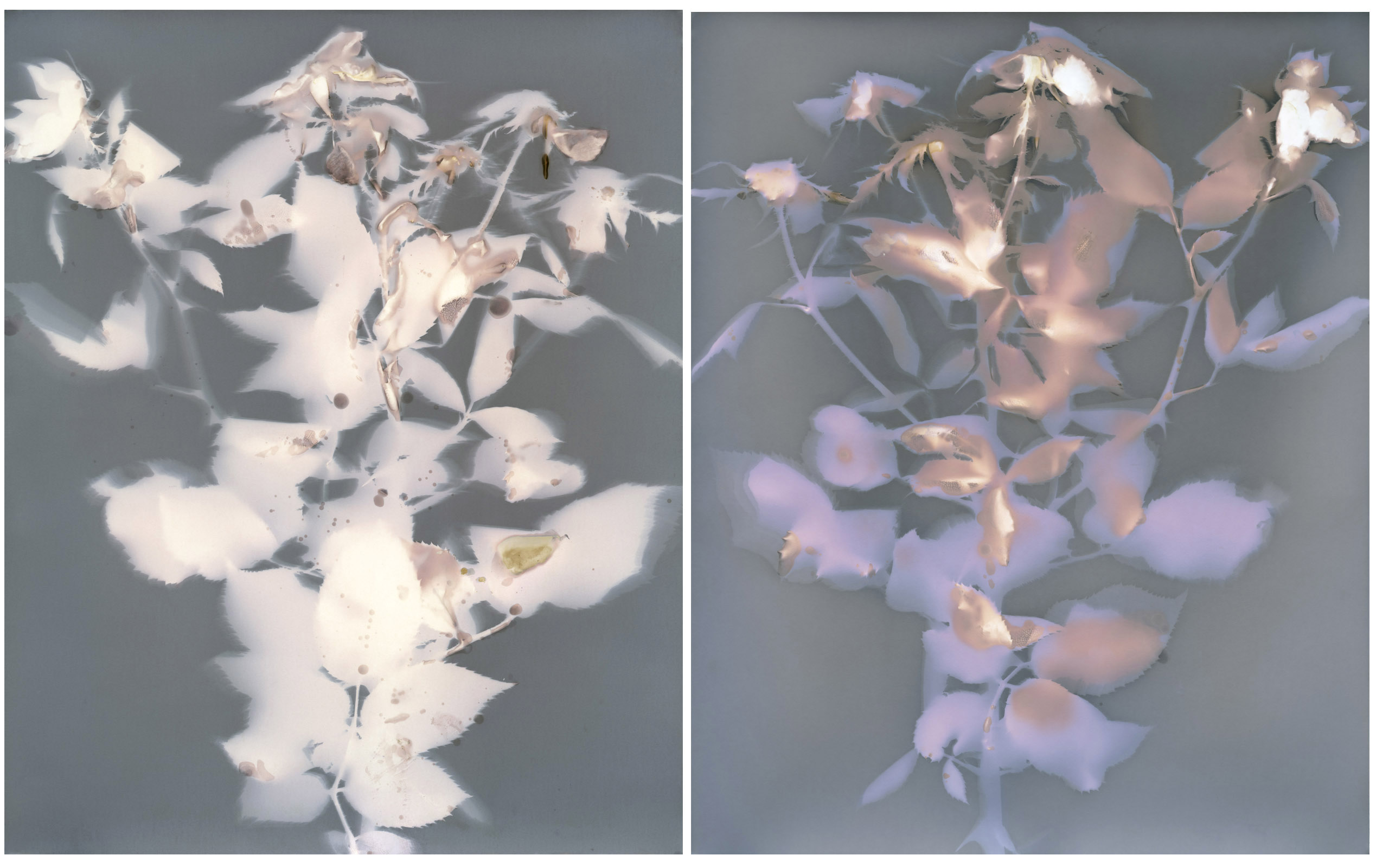 Lumen, flower, contemporary photography, light, sublime, beautiful, nature, tree